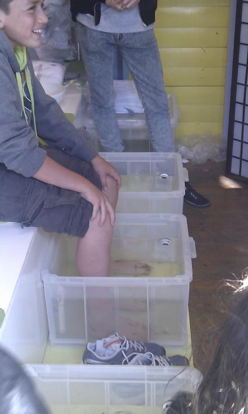 Bain de pieds aux poissons